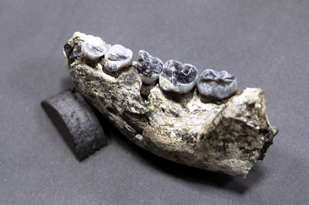 oldest-fossil-3